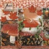 Herbstliches - Autumn Scene