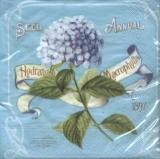 Blaue Hortensie - Hydrangea