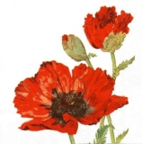 Roter Mohn - Red poppy - Pavot rouge