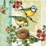 Blaumeisenfamilie - Bird Family - Famille mésange bleue