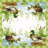 Entenfamilienglück - Duck Family - Famille de canard