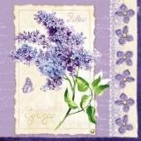 Flieder & Schmetterling - Lilac & Butterfly - Lila & papillon