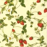 Erntereife Erdbeeren - Strawberries - Fraises