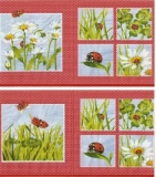 Marienkäfer, Margeriten, Klee & Gras - Ladybugs, daisies, clover and grass - Coccinelles, marguerites, trèfle & dherbe