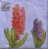 3 Hyazinthen & 1 Zwiebel -  3 Hyacinths & 1 hyacinth bulb - 3 Jacinthes & 1 jacinthe ampoule