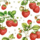 Erdbeerzeit - Strawberry plant - Temps Fraise