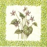 Zarte Veilchen - Delicate Violets - Violettes