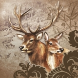 Rotwildpaar, Hirsch - Deer couple, stag - Cerf couple