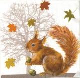 Eichhörnchen im Herbst - Squirrel in autumn - Écureuil en automne
