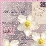 Christrose - Christmas Rose - Rose de Noël - Bonne fete