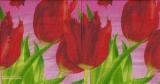 Exotische Tulpen - Exotic Tulips - Tulipes exotiques