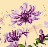 Geißblatt, Lilien & Libellen - Lily & Dragonfly - Lily & libellule