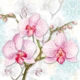 Orchideen - Orchids lilac - orchidées