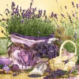 Lavendeltraum - Lavender dream - Rêve de lavande