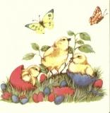 Frisch geschlüpfte Osterküken & Schmetterlinge - Newly hatched easter chicks & butterflies - Poussins nouvellement éclos pâques et papillons