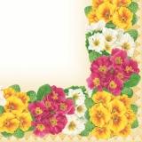 Bunter Primel-Rahmen - Colorful Primroses frame - Primevères cadre coloré