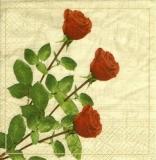 3 rote Rosen auf Noten -  3 red roses on musical notes - 3 roses rouges sur des notes de musique