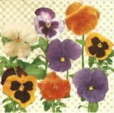 Wunderschöne, bunte Stiefmütterchen - Beautiful, colorful pansies - Beau, coloré pensées