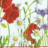 Blumenwiese mit Mohnblumen, Kornblumen & Margeriten -Spring meadow with poppies, cornflowers & daisies - Printemps pré avec des pavots, bleuets & marguerites