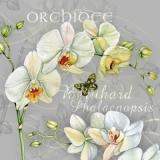 Wunderschöne Orchideenblüten & Schmetterling - Beautiful orchid flowers & butterfly - Belles fleurs dorchidée et papillon