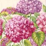 Wunderschöne Hortensien - Beautiful Hydrangeas - Belles Hortensias