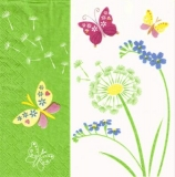 Schmetterlinge an Pusteblume, Löwenzahn - Butterflies on dandelion - Papillons sur pissenlit