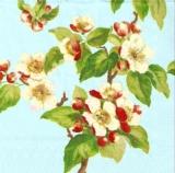 Apfelblüte blau - Apple blossom blue - Fleurs de pomme bleu