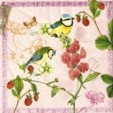 Blaumeisen, Orchideen, Erdbeeren, Schmetterling - Blue tits, orchids, strawberries, butterfly - Mésanges bleues, orchidées, fraises, papillon