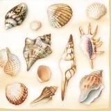 Schöne Muschelarten cream - Beautiful shell species - Belles espèces de moules