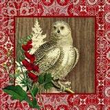 Eule im Winter - Winter woods owl - Hibou en hiver