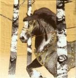 Kräftiges Pferd zwischen Bäumen - Strong horse between trees - Forte cheval entre les arbres