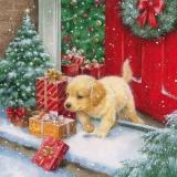 Süßer Welpe mit Geschenken im Schnee - Sweet puppy with gifts in the snow - Chiot doux avec des cadeaux dans la neige
