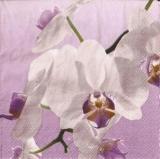 Wunderschöne Orchideenblüte - Beautiful orchid flower - Belle fleur d orchidée