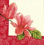 Wunderschöne Magnolie - Beautiful magnolia - Magnifique magnolia