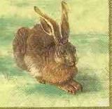 Hübscher Hase, Dürer Hase - Pretty hare, Dürer hare - Joli lièvre, Dürer lièvre