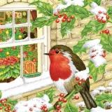 Rotkehlchen auf Ilexzweig vorm Fenster - Robin on holly branch in front of window - Robin sur la branche de houx en face de la fenêtre