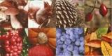 Eichhörnchen & wunderschöne Collage von herbstlichen Gaben - Squirrel & beautiful collage of autumn gifts - Ècureuil & belle collage de cadeaux dautomne