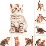 Süße Katzenbabys - Sweet kittens - Chatons doux