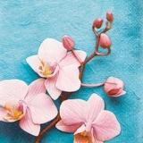 Wunderschöne Orchideen - Beautiful orchids - Belles orchidées