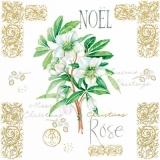 Christrose - Christmas Rose - Rose de Noël