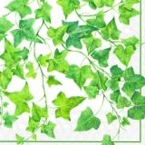 Efeuranken weiß - Ivy tendrils - Vrilles de lierre