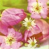 Blumenpracht pink, Tulpen - Flowers pink, tulips - Fleurs roses, tulipes