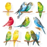 Bunte Vogelschar - Colourful birds - Colorful troupeau doiseaux