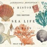 Muscheln & Seesterne - Shells & Starfish, Sea Life - Des Shells & Étoiles de mer