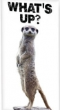 Erdmännchen, whats up - Suricate