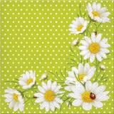 Margeritenarrangement & Marienkäfer- Daisy arrangement & Ladybug- arrangement Marguerites & Coccinelle
