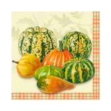 Kürbisse klein - Pumpkins