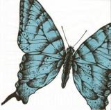 Blauer Schmetterling - Blue butterfly - Papillon bleu
