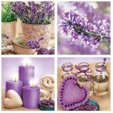 16 x Lavendel, Lavender, Lavande