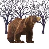 Braunbär - Grizzly - Brown Bear - Ours brun
